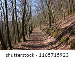 hiking trail in a bold... | Shutterstock . vector #1165715923