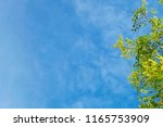 ecology concepts  tree branches ... | Shutterstock . vector #1165753909