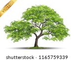 beautiful tree realistic  on a... | Shutterstock .eps vector #1165759339