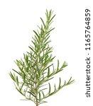 sprig of fresh rosemary... | Shutterstock . vector #1165764859