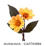 Yellow Dahlia Flower With...