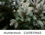 background or texture of pine... | Shutterstock . vector #1165819663