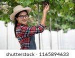asian woman in the vineyard... | Shutterstock . vector #1165894633