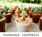 small cactus in a flowerpot on... | Shutterstock . vector #1165906213
