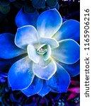 blue cactus nature. nature plant | Shutterstock . vector #1165906216