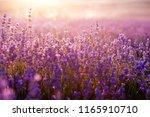 lavender flowers   sunset over...   Shutterstock . vector #1165910710