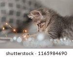 Curious Gray Kitten Sitting On...