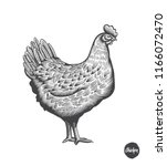 chicken hand drawn illustration ... | Shutterstock .eps vector #1166072470
