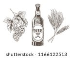 hop and wheat bunches isolated... | Shutterstock .eps vector #1166122513