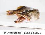 Fish Pike With Sharp Teeth