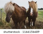 Cute Young Groomed Horses With...