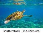 sea turtle underwater photo.... | Shutterstock . vector #1166204626