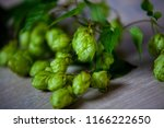 fresh green beer hops | Shutterstock . vector #1166222650