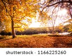 beautiful  golden autumn... | Shutterstock . vector #1166225260
