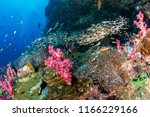 beautiful clownfish and other... | Shutterstock . vector #1166229166