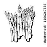 asparagus vector isolated on... | Shutterstock .eps vector #1166267836