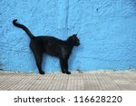 Stock photo black cat with blue wall background alert position 116628220
