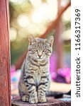 charming cat with beautiful eyes | Shutterstock . vector #1166317369
