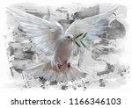 White Pigeon Sketch   Oil Color ...