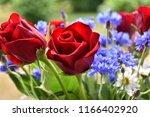 red rose closeup in a summer... | Shutterstock . vector #1166402920