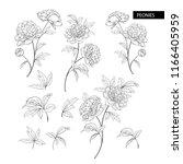 set of peony flowers elements.... | Shutterstock .eps vector #1166405959