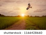 black eared kite  milvus... | Shutterstock . vector #1166428660