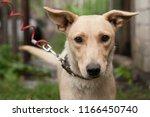 a sad little dog in a shelter.... | Shutterstock . vector #1166450740