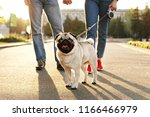Stock photo funny puppy of pug sitting on floor near couple owners feet on concrete walkway at park female 1166466979