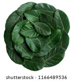 arranged or decorate leaf ...   Shutterstock . vector #1166489536