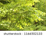 heart shaped leaves illuminated ... | Shutterstock . vector #1166502133