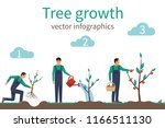 process of growth of tree from... | Shutterstock .eps vector #1166511130