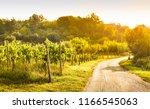 vineyard by the road  warm... | Shutterstock . vector #1166545063