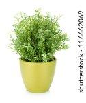 decorative flower in flowerpot. ... | Shutterstock . vector #116662069