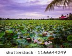 pink and red lotus lake in... | Shutterstock . vector #1166644249