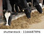 dairy farming                   ... | Shutterstock . vector #1166687896