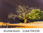 namibia  south africa. the... | Shutterstock . vector #1166734150