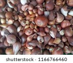 onion background. brown.... | Shutterstock . vector #1166766460