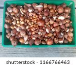 onion background. brown.... | Shutterstock . vector #1166766463