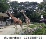 kuala lumpur  malaysia  august... | Shutterstock . vector #1166805436