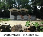 kuala lumpur  malaysia  august... | Shutterstock . vector #1166805463