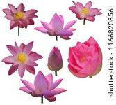 Group Fresh Pink Lotus Petal - Fine Art prints