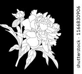peony flowers on a white... | Shutterstock .eps vector #1166830906
