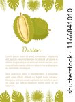 durian exotic juicy fruit with... | Shutterstock .eps vector #1166841010