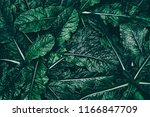 tropical leaf  dark green... | Shutterstock . vector #1166847709