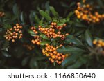 close up on beautiful branches... | Shutterstock . vector #1166850640
