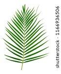 Green Leaves Pattern Leaf Palm...