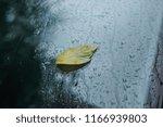 raindrops  yellow autumn leaf... | Shutterstock . vector #1166939803