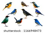 collection of beautiful birds... | Shutterstock . vector #1166948473