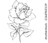 rose flower in a style isolated.... | Shutterstock . vector #1166963119