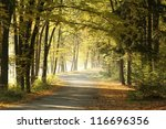 Forest Trail On A Sunny October'...